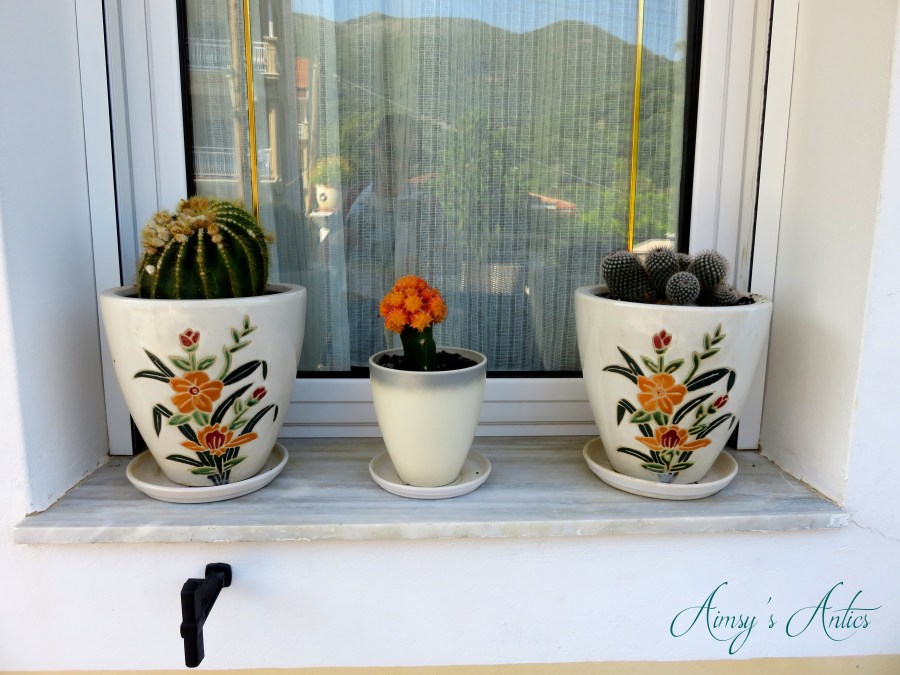 3 cacti in flower decorated pots on a windowsill ledge