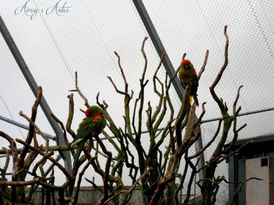 Parrots sat on branches at South Lakes Safari Zoo