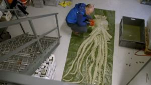 """Second episode of Science Channel's """"Mythical Beasts"""" searches deep for the kraken"""
