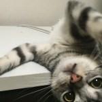 SEO猫ほたて。