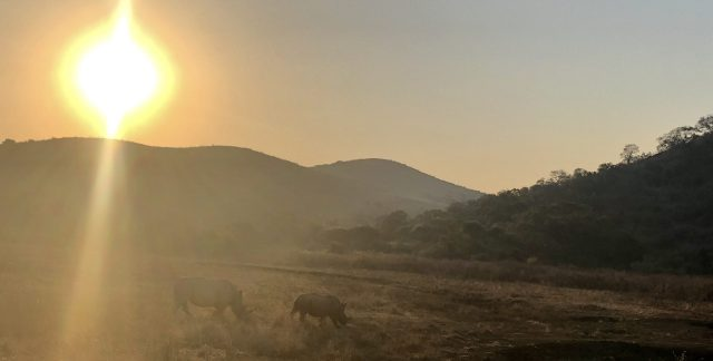 A pair of rhino in rural South Africa