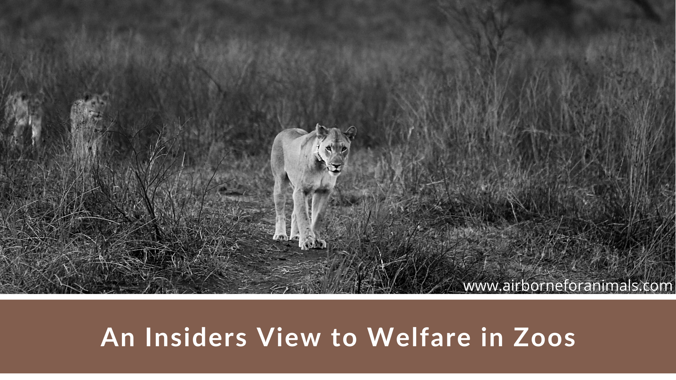 An Insiders View to Welfare in Zoos