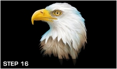 harder-steenbeck-eagle-wildlife-stencils-with-step-by-step-instructions-12