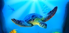 harder-steenbeck-turtle-sea-life-stencil-with-step-by-step-instructions-12