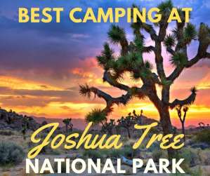 Joshua Tree National Park: History, Camping Tips and Things to Do
