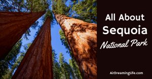 Everything To Know About Sequoia National Park – Top Tips For Visiting