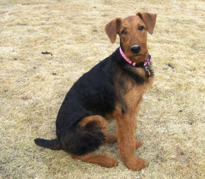 Jazmine – available for adoption/Adoption completed
