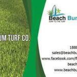 Beach Bum Turf