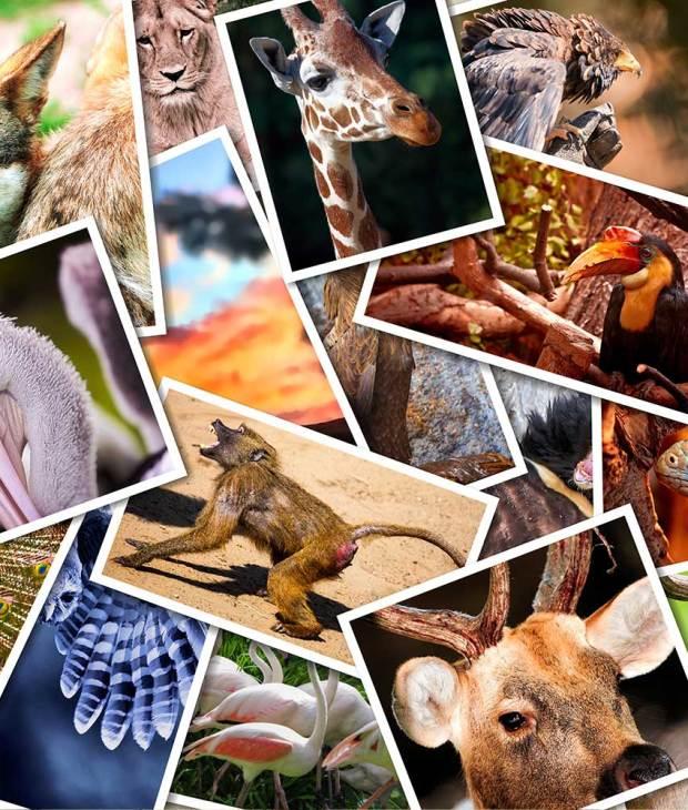 Live animals transported through various countries to Cebu
