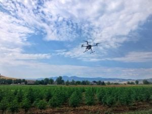 a new niche for commercial drones hemp industry Airplane GEEK A New Niche for Commercial Drones: Hemp Industry
