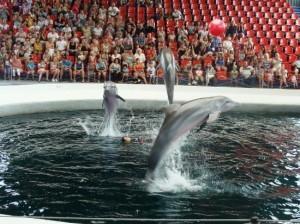 dolphinarium-300x224