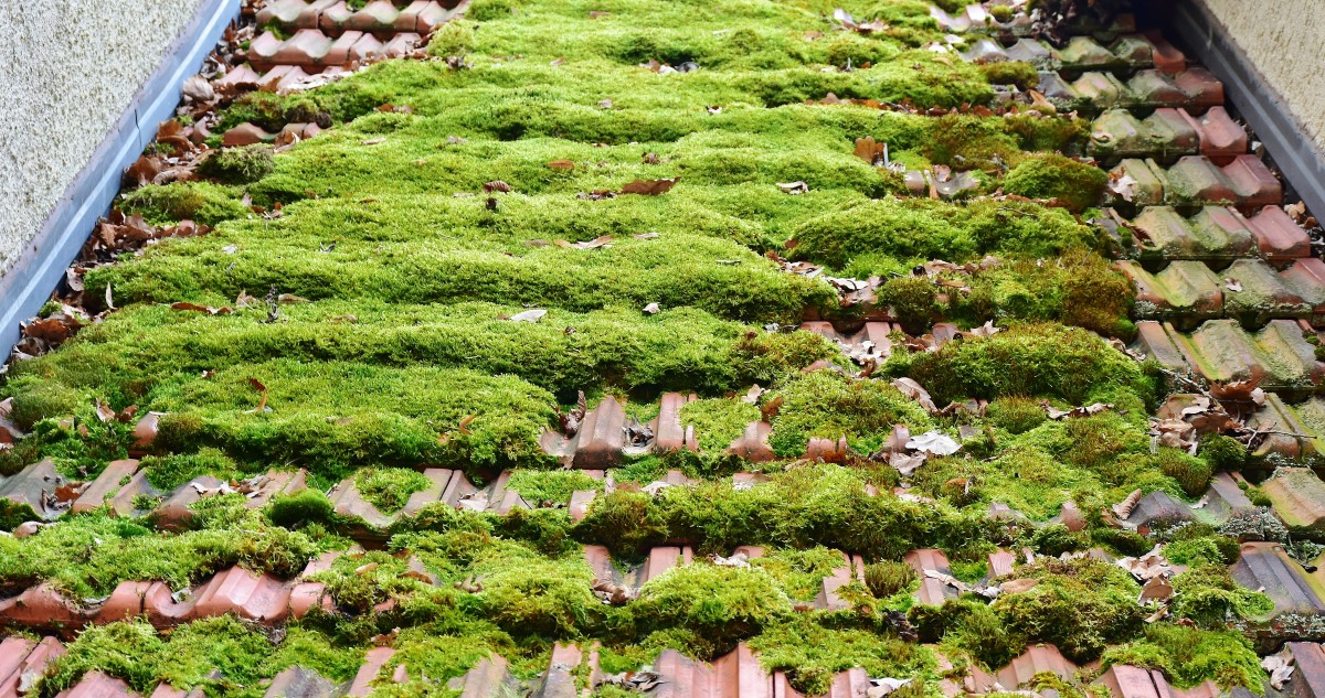 roof_brick_moss_roofing_tile_house_roof_tile_roof_home-1265337