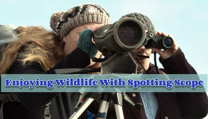 Tips for enjoying wildlife with spotting scopes- Don't miss it