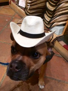 dog with cowboy hat