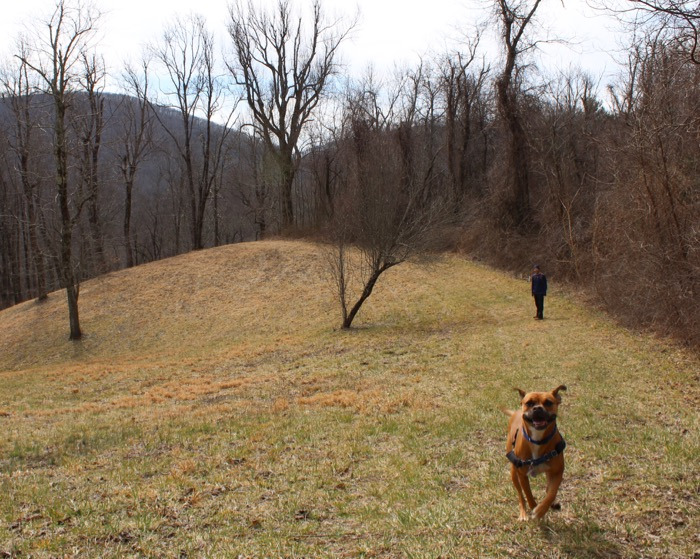 dog hiking near asheville