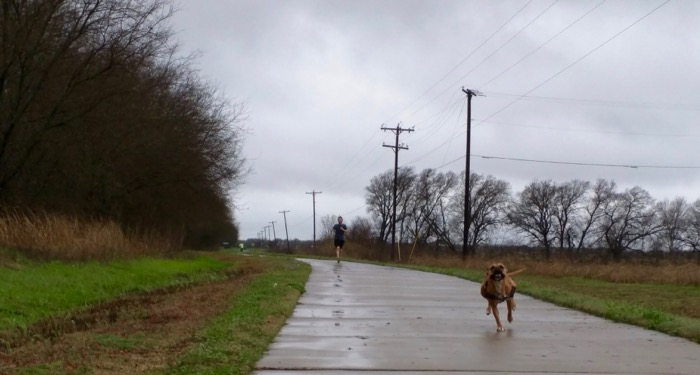 cotton belt trail