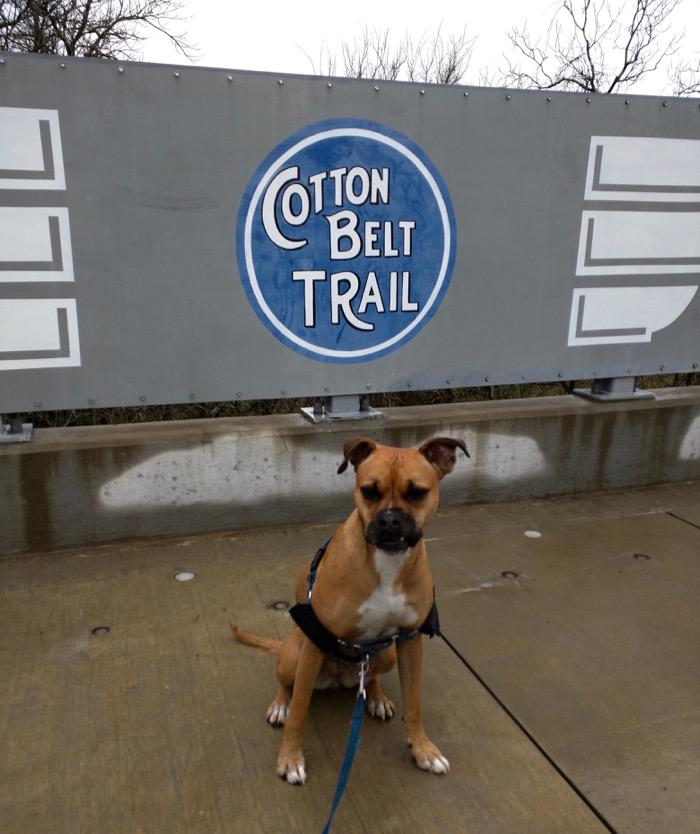 cotton belt trail