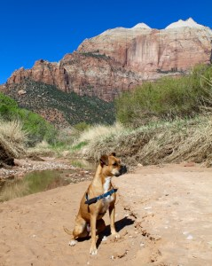bugsy at zion national park