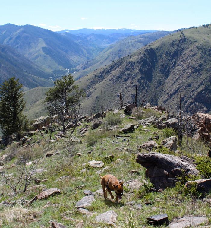 greyrock mountain hiking dog