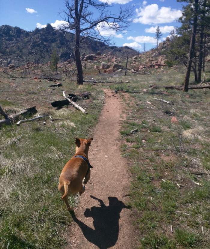 greyrock mountain running dog