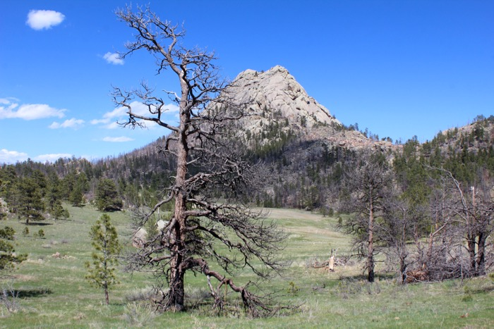 greyrock mountain meadow