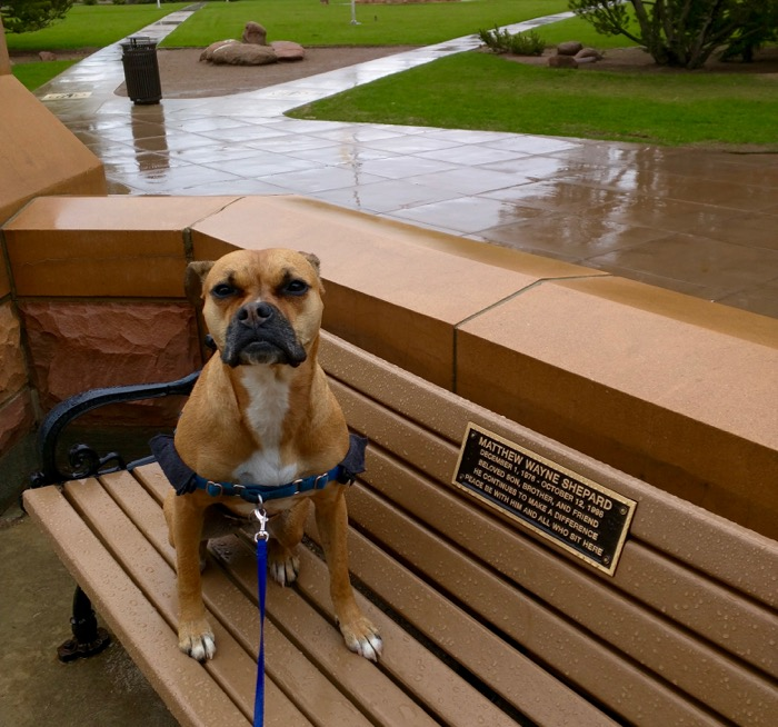 laramie matthew shepard bench dog
