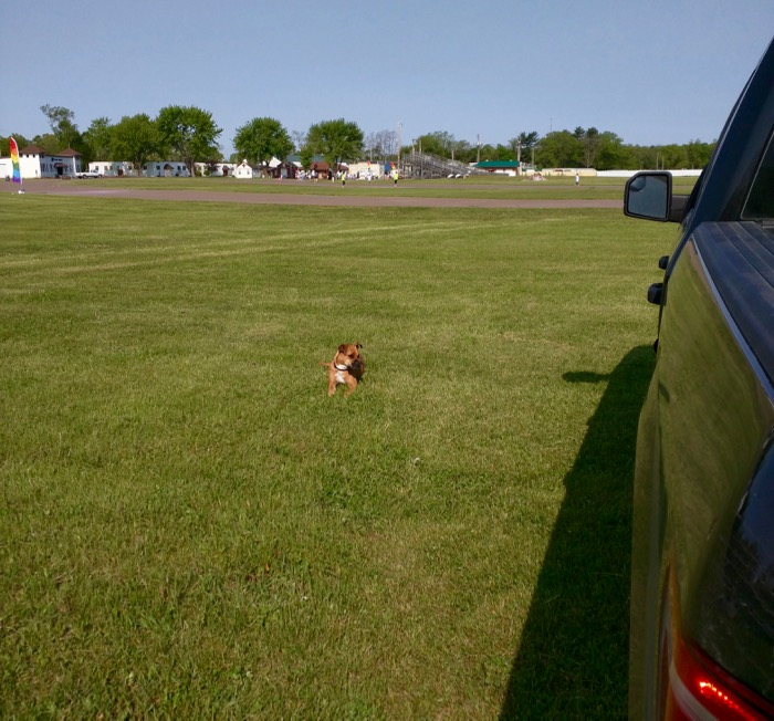 dog and f-150 at fairgrounds