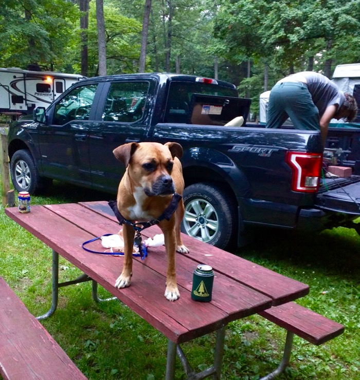 bugsy on picnic table at bardstown campground