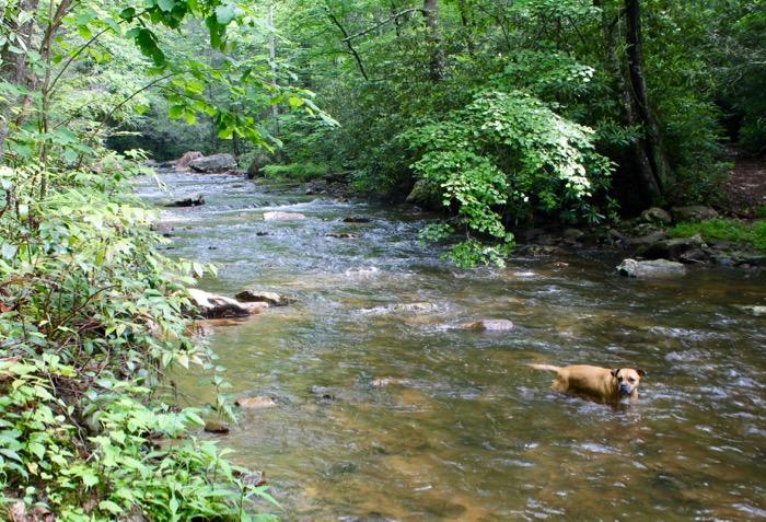 laurel falls hike dog in river