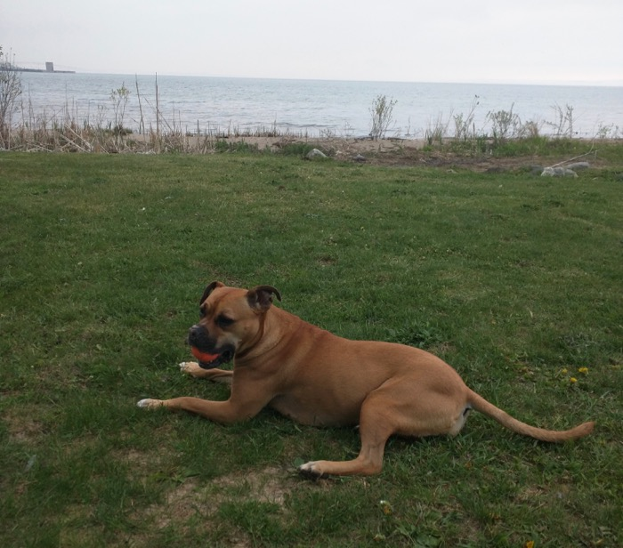 dog at straits of mackinac