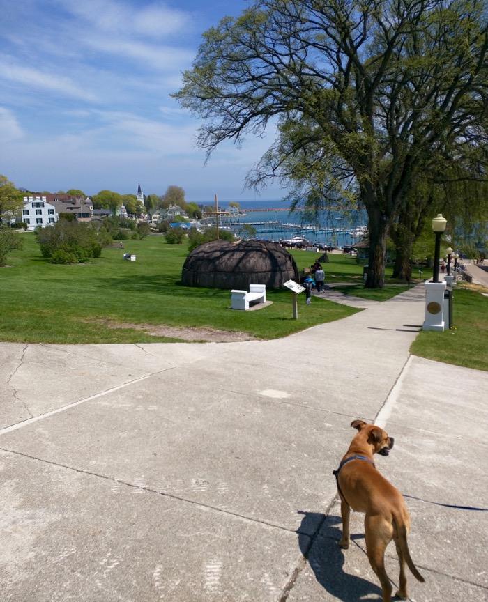dog on mackinac island