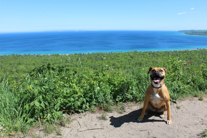 dog hiking alligator hill lake michigan