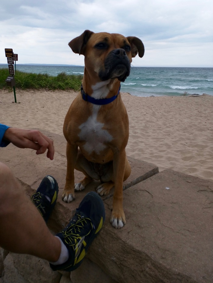dog at lake michigan beach park empire michigan