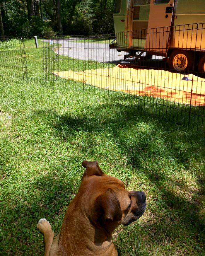 dog and airstream at julian price campground