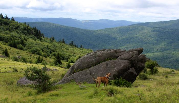 mount rogers hiking dog