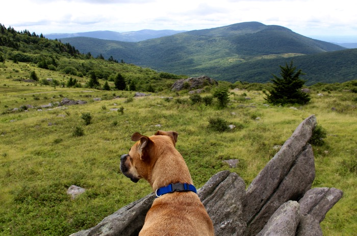 mount rogers hiking dog
