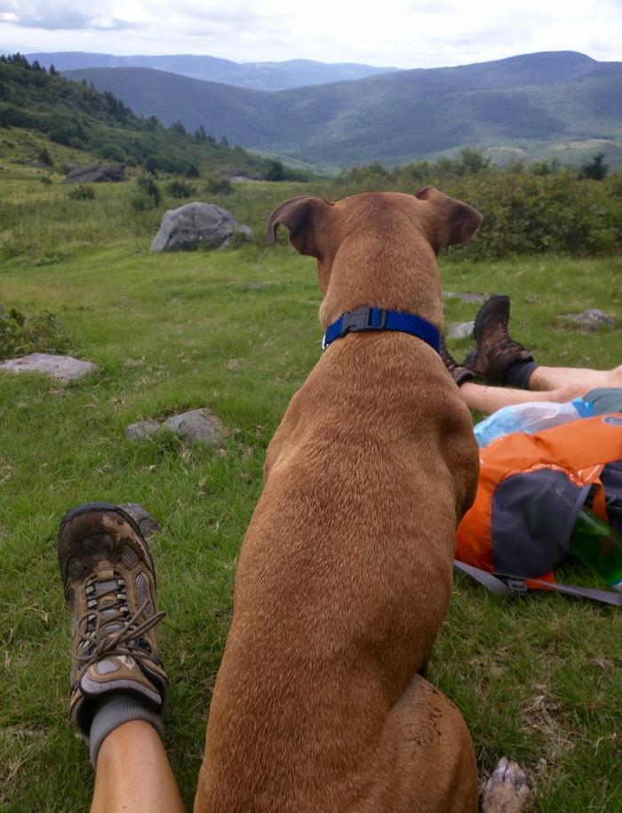 dog hiking mount rogers