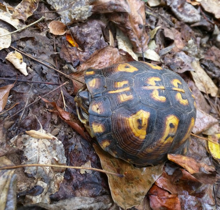turtle at campground