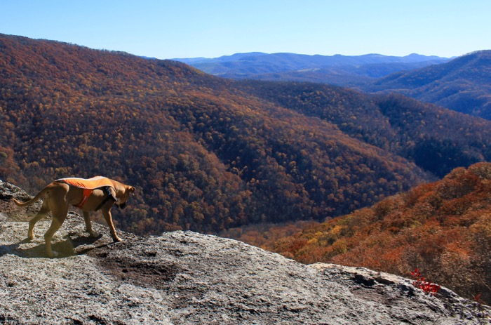 dog on table rock canaan mountain backcountry