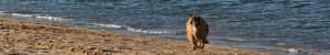 dog running on lone rock beach