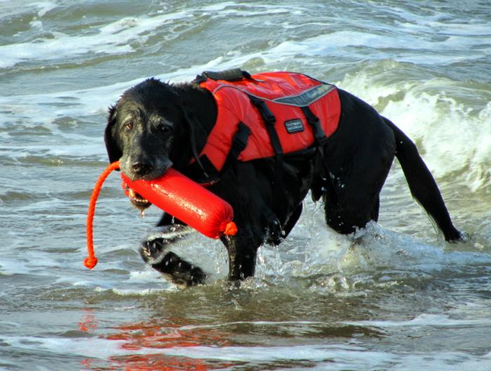 dog in ocean
