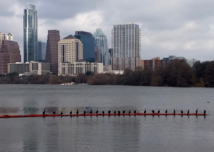 austin skyline and town lake
