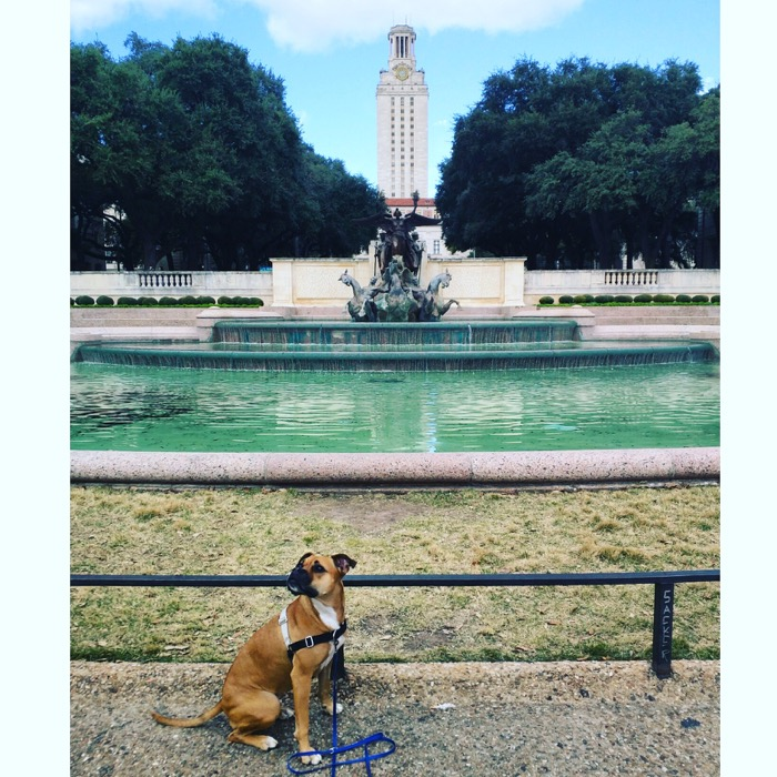 dog at ut-austin fountain