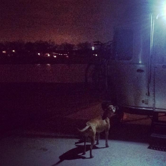 dog and airstream