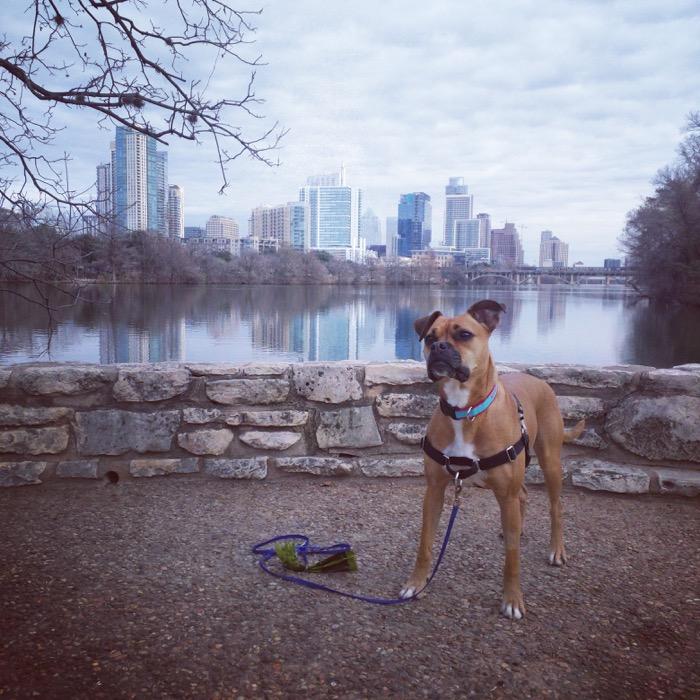 dog and austin skyline