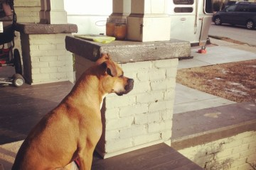 bugsy on the porch by the airstream