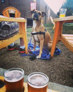 dog at birdsong brewing, charlotte