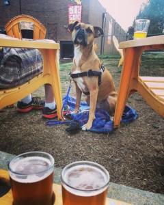 dog at birdsong brewing, charlotte