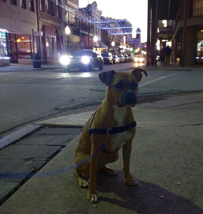 dog in downtown mobile
