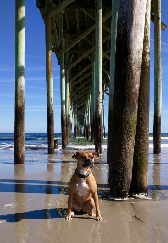 dog under pier